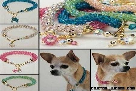 Collares de lujo para mascotas