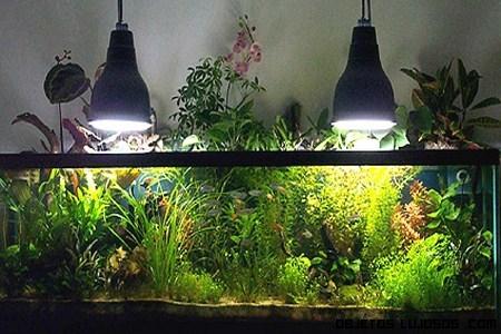 Jardines acu ticos en casas modernas for Estanques y jardines acuaticos