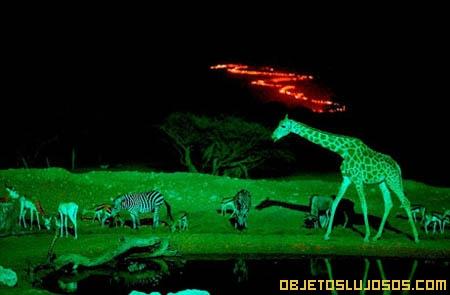 Zoológico nocturno es el más caro