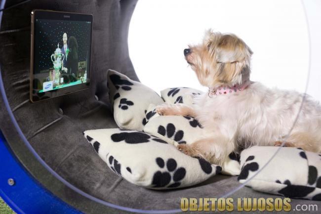 perro en su casa samsung