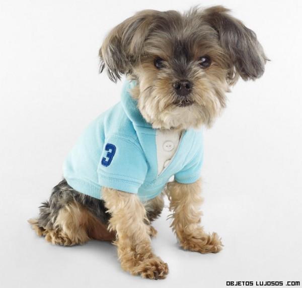 moda canina 2013